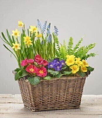 Bold Brights Planted Basket: Booker Flowers and Gifts