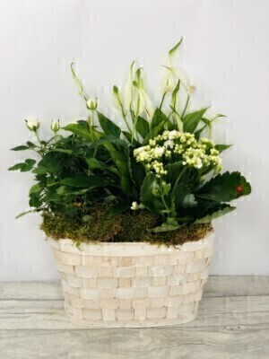 Pure and White Planter: Booker Flowers and Gifts