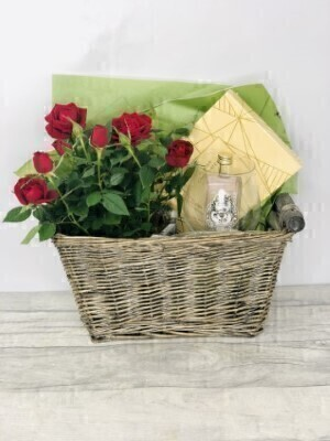 Red Rose Plant and Gin Gift Set: Booker Flowers and Gifts