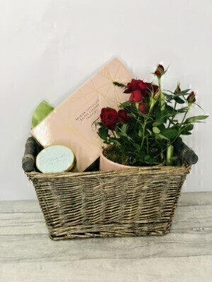 Rose Plant Chocolates and Candle Basket: Booker Flowers and Gifts