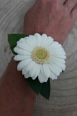 White Gerbera Wrist Corsage: Booker Flowers and Gifts