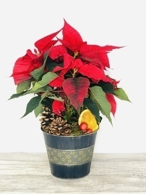 We have a wide selection of Planted Arrangements - we offer Flower Delivery Liverpool. We can provide Planted Arrangements for you in Liverpool - Merseyside and can organize Planted Arrangement deliveries for you Nationwide. 